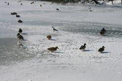 El lago en un cielo azul durante invierno Imagen de archivo