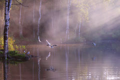 El lago hermoso con las gaviotas blancas, cuece por encima de la superficie al vapor Imagen de archivo