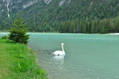 El lago maravilloso Braies en las dolomías en primavera con las montañas todavía cubiertas en nieve foto de archivo libre de regalías