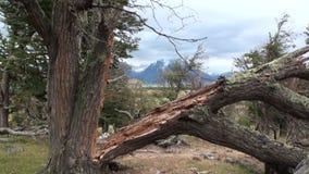 El lago mountain se ve en fondo a través de árboles y bosque en Patagonia almacen de metraje de vídeo
