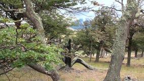 El lago mountain se ve en fondo a través de árboles y bosque en Patagonia almacen de video