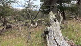 El lago mountain se ve en fondo a través de árboles y bosque en Patagonia metrajes