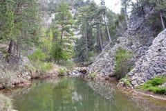 El lago rodeado de árboles le gusta un paraíso Imagen de archivo