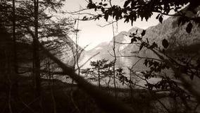 El lago sseen entre ramas de árbol metrajes