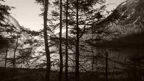 El lago sseen entre ramas de árbol almacen de metraje de vídeo