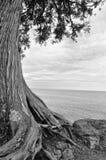 El lago Superior Treescape Fotografía de archivo