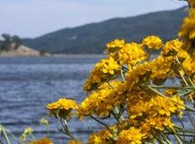 El lago Tahoe del norte Fotos de archivo libres de regalías