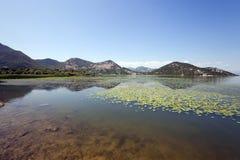 El lago verano del año Fotos de archivo