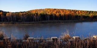 El lago y el bosque del abedul por la mañana se encienden Fotos de archivo