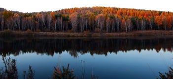 El lago y el bosque del abedul por la mañana se encienden Foto de archivo libre de regalías
