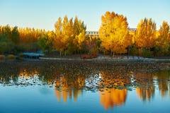El lago y los árboles de oro Foto de archivo