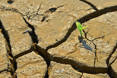El lanzamiento agrietado seco del verde de la tierra, cierre para arriba, nueva vida, nueva esperanza, cura el mundo Fotos de archivo