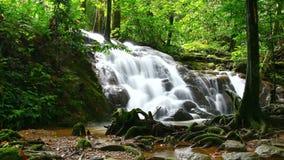 El lapso de tiempo de la cascada tropical en bosque profundo, enfoca adentro metrajes