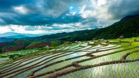 El lapso de tiempo, nubes que se movían sobre los campos del arroz reflejó en el agua almacen de video