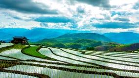 El lapso de tiempo, nubes que se movían sobre los campos del arroz reflejó en el agua metrajes