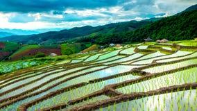 El lapso de tiempo, nubes que se movían sobre los campos del arroz reflejó en el agua almacen de metraje de vídeo