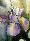 El lavado mojado de la fantasía floral del extracto del fondo del arte de la acuarela empañó el iris solo stock de ilustración