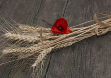 El lazo del trigo adornado a una flor de la amapola roja Imagenes de archivo