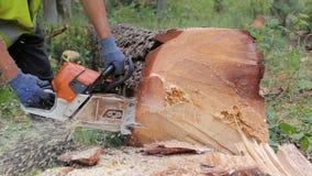El leñador corta el tronco de árbol usando la motosierra antes del transporte almacen de metraje de vídeo
