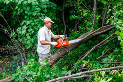 El leñador utiliza su motosierra cortó el árbol Fotos de archivo