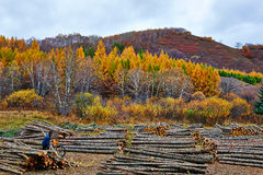 El leñador y la madera Foto de archivo