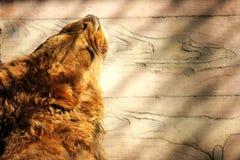 El león del sol Imagenes de archivo