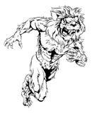 El león se divierte el funcionamiento de la mascota Foto de archivo libre de regalías