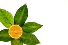 El limón en el corte en las hojas del árbol de limón Imagenes de archivo