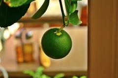 El limón verde imágenes de archivo libres de regalías