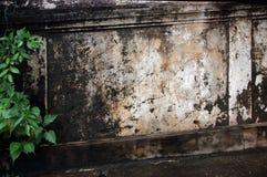 El liquen (secado) cubrió la pared Imagen de archivo