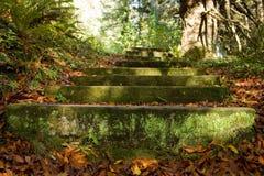 El liquen y el musgo cubrieron pasos en una trayectoria de bosque Fotografía de archivo