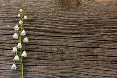 El lirio de los valles de la flor blanca en un fondo del viejo tablero gris del granero se agrieta Fotos de archivo libres de regalías
