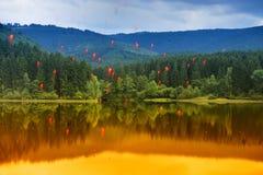 el llover de las bayas del Serbal-árbol Foto de archivo libre de regalías