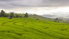 El llover en campo verde de la terraza del arroz y el cielo nublado fotos de archivo