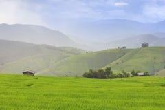 El llover en campo verde de la terraza del arroz y el cielo nublado foto de archivo libre de regalías
