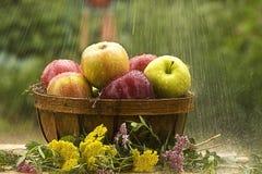 El llover en manzanas Imagen de archivo libre de regalías