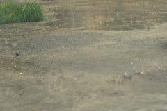 El llover pesado Gotas de agua en el aire libre Lluvia de primavera Autumn Rain foto de archivo libre de regalías