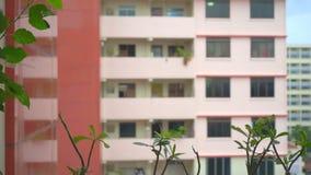 El llover sobre foco de los apartamentos en las macetas metrajes