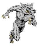 El lobo del hombre lobo se divierte el funcionamiento de la mascota Imágenes de archivo libres de regalías