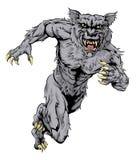 El lobo del hombre lobo se divierte el funcionamiento de la mascota Fotos de archivo libres de regalías