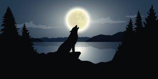 El lobo está gritando a la Luna Llena por el lago ilustración del vector
