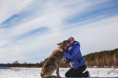 El lobo gris besa a la muchacha en los labios Campo Nevado cerca del bosque imágenes de archivo libres de regalías