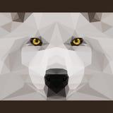 El lobo salvaje mira fijamente adelante Cubierta geométrica abstracta de los triángulos del polygonat Imágenes de archivo libres de regalías