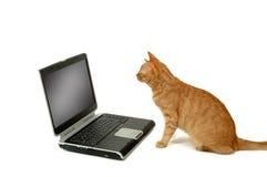 El lokking que se sienta del gato en la computadora portátil Imagen de archivo libre de regalías