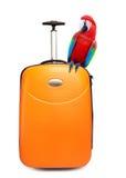 El loro colorido se sienta en una maleta para el recorrido Imagenes de archivo