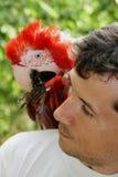 El loro del macaw en el hombro del dueño foto de archivo libre de regalías