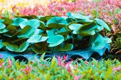 El loto de la hoja de la fantasía y la hoja clavan la flor en sumer sping fotos de archivo libres de regalías