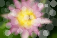 El loto rosado Foto de archivo