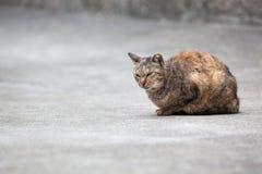 El lugar del gato imagenes de archivo