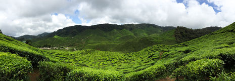 El lugar en donde los amantes del té aprecian Fotos de archivo